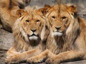 ¡Día Mundial de los Animales! Saca tus entradas para ir al zoo