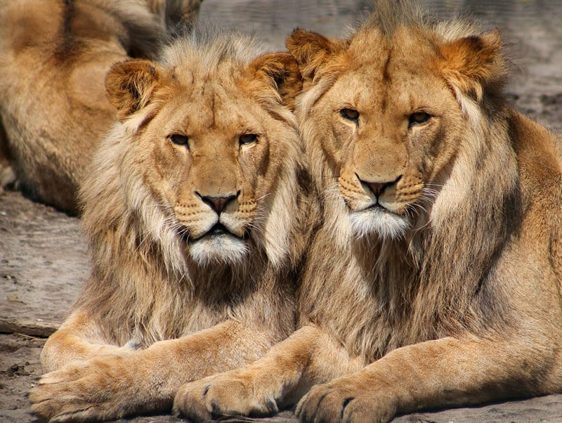 https://www.mistercomparador.com/noticias/wp-content/uploads/2016/09/dia-mundial-animales.jpg