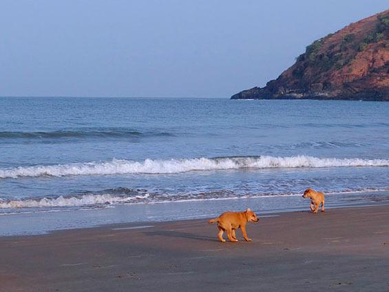 Los destinos turísticos ideales para viajar con mascotas
