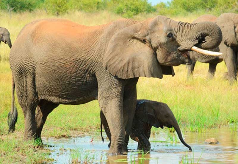 https://www.mistercomparador.com/noticias/wp-content/uploads/2017/10/dia-mundial-animales.jpg
